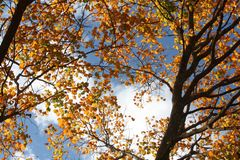 Trees in the fall. Image of Iowa trees in the fall Royalty Free Stock Photos