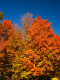 Trees in the fall Stock Image