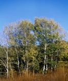 Trees in fall season stock photos
