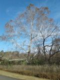 TREES IN FALL SEASON. Stock Photography