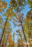 Trees in the fall. On a sunny day royalty free stock photos