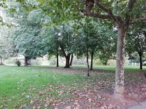 Trees. With fallen leaves in autumn day stock photos