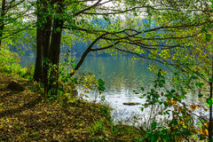 Trees and Fallen Leaves by Lake Stock Photography