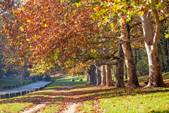 Trees with fallen leaves Royalty Free Stock Photo