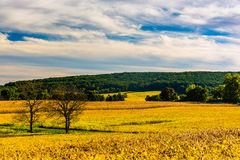 Trees in a farm field in rural York County, Pennsylvania. Royalty Free Stock Images