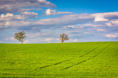 Trees in a farm field in rural York County, Pennsylvania. Royalty Free Stock Photo