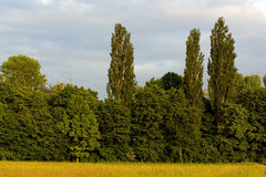 Trees on farm land and blu sky and clouds Stock Photos