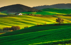 Trees and Farmland near Volterra, rolling hills on sunset. Rural. Tuscany, rolling hills on sunset. Volterra rural landscape. Green fields, farmland and trees Stock Photos