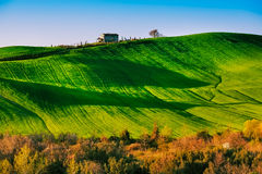 Trees and Farmland near Volterra, rolling hills on sunset. Rural Stock Photo