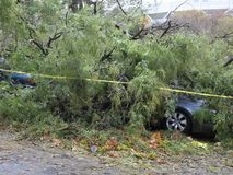 Trees that fell the day after Hurricane Sandy. BRONX, NEW YORK, USA - OCTOBER 28: Trees that fell are shown the day after Hurricane Sandy swept through the stock video footage