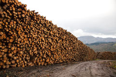 Trees felled. And stored for the industry Stock Photo