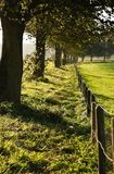 Trees and fence in country on autumn day Stock Photos
