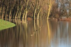 Trees and fence in the flooded river ijssel Royalty Free Stock Image