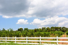 The trees and fence Royalty Free Stock Image