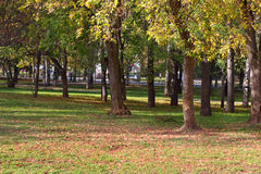 Trees in in fenced park among grass and leaves Royalty Free Stock Photography