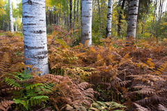 Trees and ferns. Stock Images