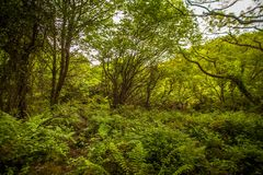 Trees and ferns in forest. Trees and green ferns in sunny garden landscape Stock Images