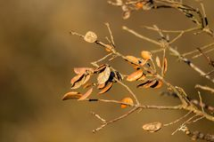 Trees with few leaves and dry about to fall with brown background royalty free stock photo