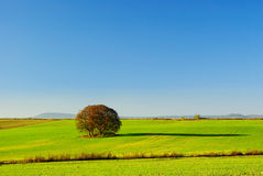 Trees in field stock images