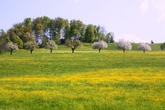 Trees in field Royalty Free Stock Images