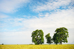 Trees on field Stock Photography