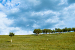 Trees in field. Scenic view of trees in field with blue sky and cloudscape background Stock Images