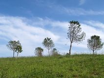 Trees in a field. Green field with trees Royalty Free Stock Image
