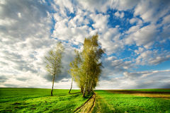 Trees in field Stock Photo