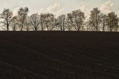 Trees at a field Stock Photography
