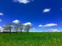 Trees in field blue sky. Four trees in a green field with blue sky and clouds. Location south east France. Time of year April royalty free stock photography