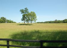 3 trees in a field on a country road. Royalty Free Stock Photography