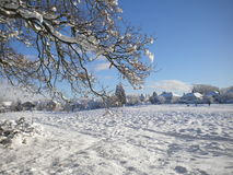 Trees and a field covered in snow Stock Image