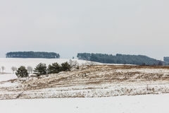 Trees in field covered by snow. Winter scenery Stock Photo