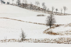 Trees in field covered by snow. Winter scenery Royalty Free Stock Images