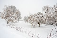 Winter view of trees covered by snow. Trees and field covered by snow stock image