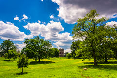 Trees in a field in Druid Hill Park, Baltimore, Maryland. Royalty Free Stock Images