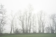Trees in the field in fall in the morning with fog Royalty Free Stock Photo