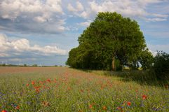 Trees at field with flowers Royalty Free Stock Photography