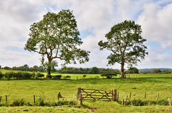Trees and a field gate in rural English landscape. A traditional English wooden gate, leading into an enclosed field, with two mature trees under a blue Summer Royalty Free Stock Photos