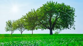 Trees in a field. Generation growth legacy family concept. Panoramic view of trees in a field. Generation growth legacy family concept stock photo