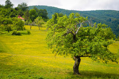 Trees in a field Stock Photography