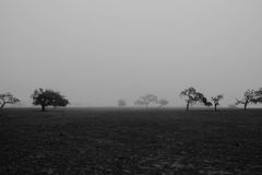 Trees on Field Grayscale Photo Stock Photo