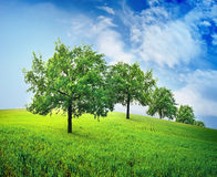 Trees in field Stock Image