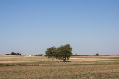 Trees in a Field Royalty Free Stock Photo