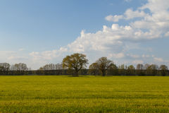 Trees in a field Stock Image