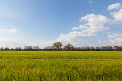 Trees in a field. Photograph of some trees on a green field during springtime on the countryside of Northern Gemany close to Winsen (Aller stock image