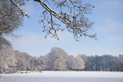 Trees and field in snow covered winter landscape Stock Image
