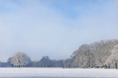 Trees and field in snow covered winter landscape Royalty Free Stock Image