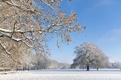 Trees and field in snow covered winter landscape Stock Photo