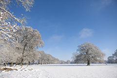 Trees and field in snow covered winter landscape Stock Images